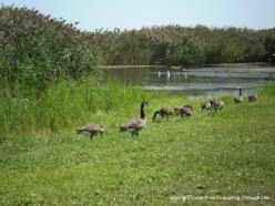 Birds of Levy Park