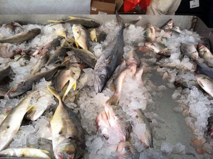 Boston fish market, 2014