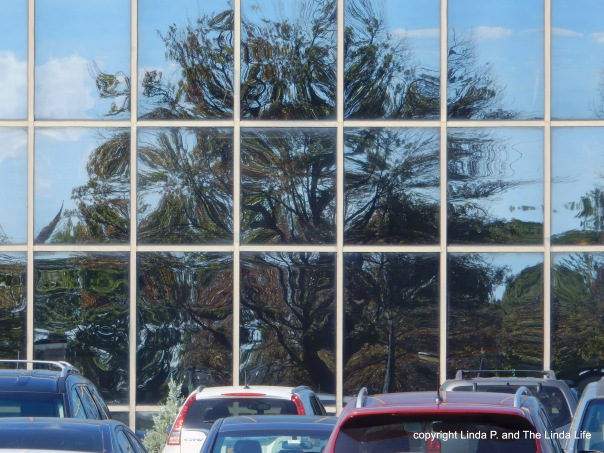 Tree reflected on glass office building in New HydePark, Nassau County, New York