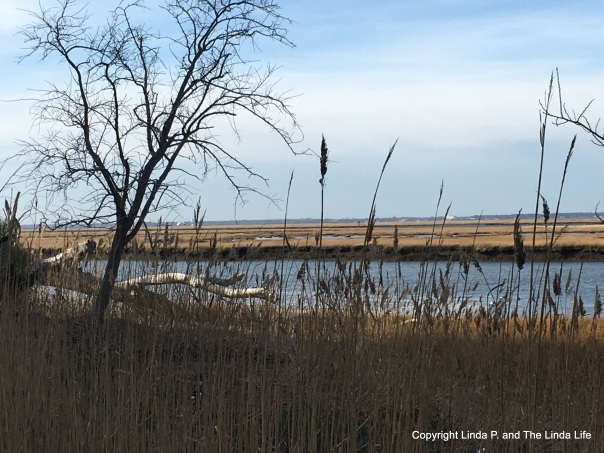 Atlantic City nature path in the Marina District