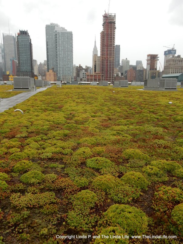 Sedum planted on the green roof of the Jacob Javits Convention Center in NYC. CREDIT Linda P. and The Linda Life. MUST OBTAIN PERMISSION BEFORE USING THIS IMAGE. www.TheLindaLife.com